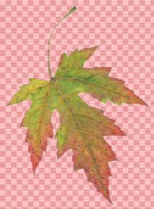 Masked Leaf